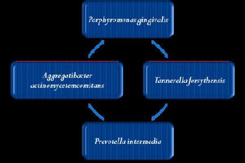 Periodontopatógenos com maior fator de virulência e maior poder de associação