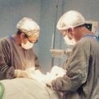 Dra. Priscilla Carolina (Cirurgiã-Dentista)