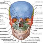 Dr. Murilo Fabricio Antunelli (Cirurgião-Dentista)